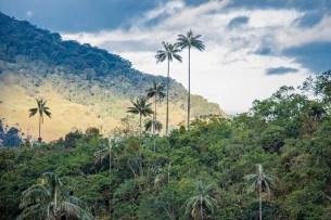 Salento - Colombie (13)