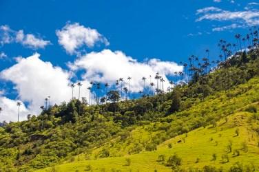 Salento - Colombie (6)