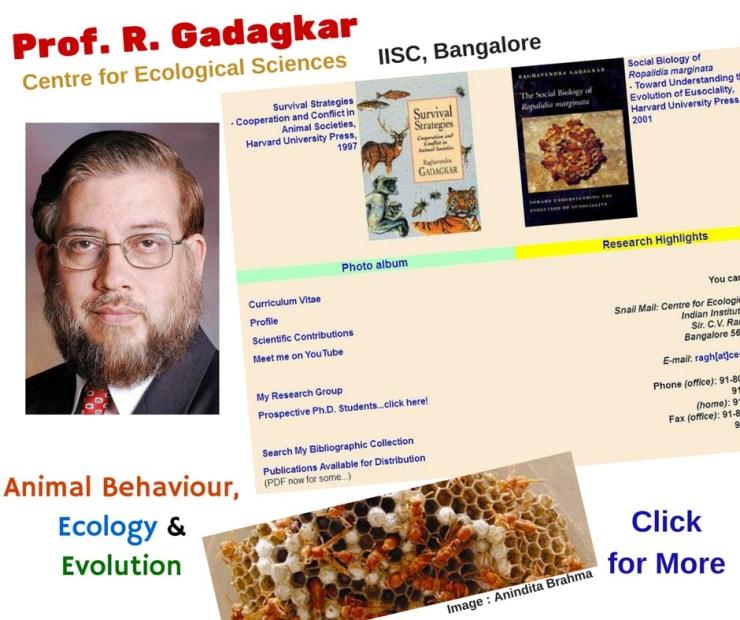 Prof. R. Gadagkar