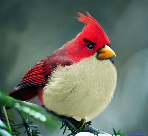 Natural And Real Red Angry Bird