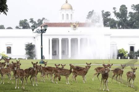 Rusa istana bogor, Jakartatraveller.com