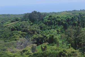 hutan perawan pulau biawak, jakarta traveller, JAKARTA TRAVELLER , INDONESIA TRAVEL GUIDE