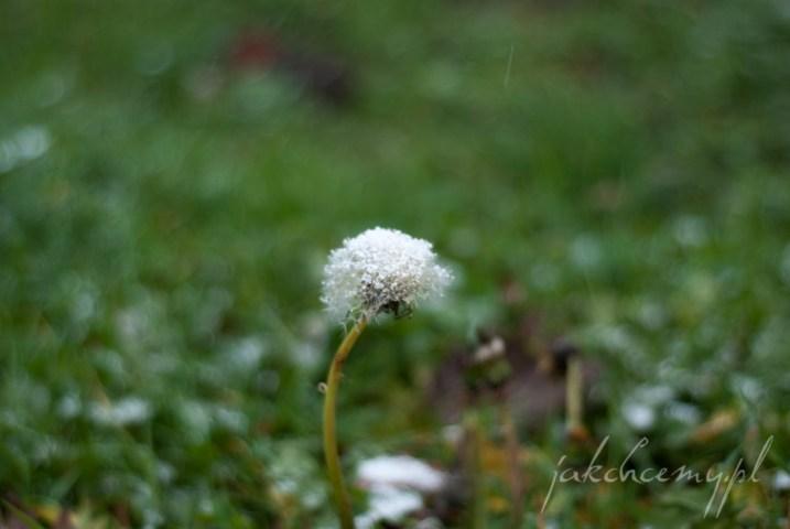 dmuchawiec pod pierwszym sniegiem krk