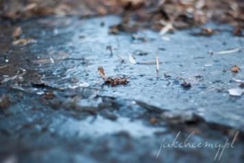 lodowa kaluza park krk