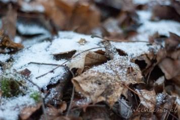 śnieg pierwszy jesienne liście krk