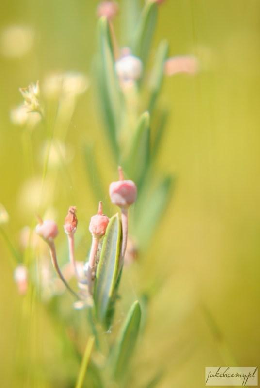 13-obary-roslinka-kwiatki-owoce