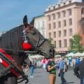 Koń w Krakowie