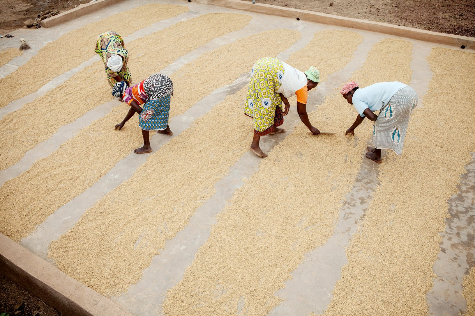 Rice is sorted and dried at a farmers' cooperative in Sourou Province, Burkina Faso.