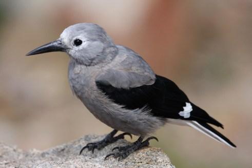 winter facts, birds
