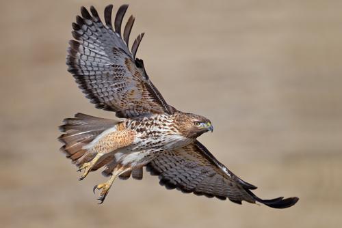 Las aves más comunes de América del Norte - Aves y floraciones