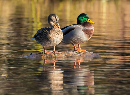Sexual Dimorphism - Differences Between Males  Females - Jakes Nature Blog-5015