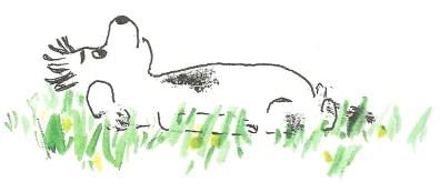 dog fungus 3
