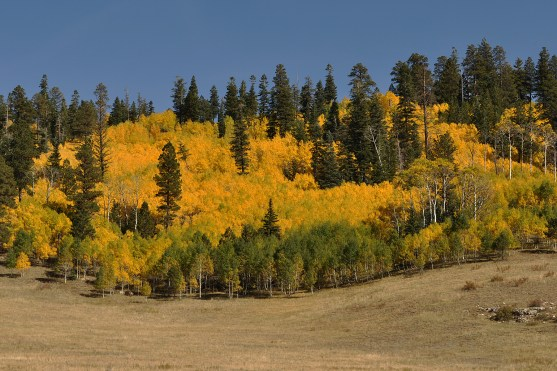 aspen-fall-blog blog Fall fall colors jakes fun facts about nature Nature outdoors trees