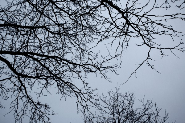 winter-tree-branches-600x400