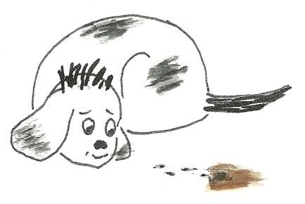 dog ants