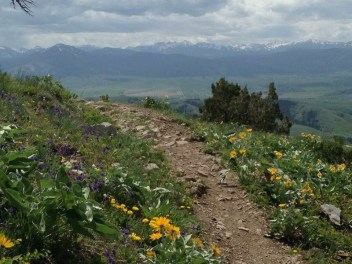 hiking bozeman M trail