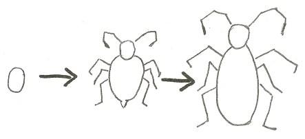 simple metamorphosis diagram