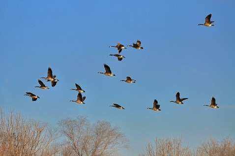 fun fall facts, bird migration