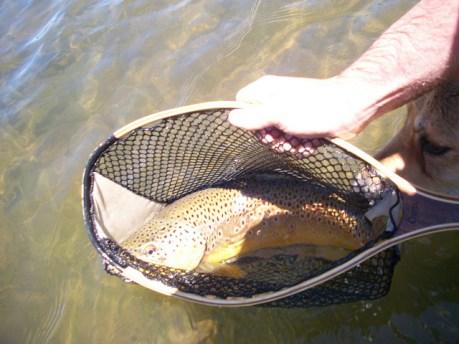 safe fish handling, trout, net