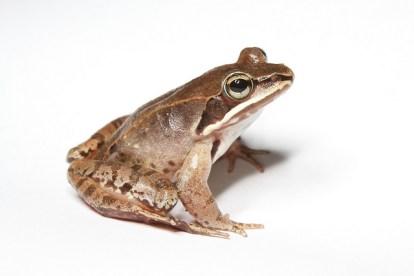 amphibian facts