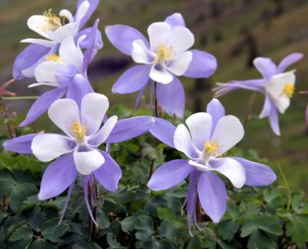 favorite wildflowers