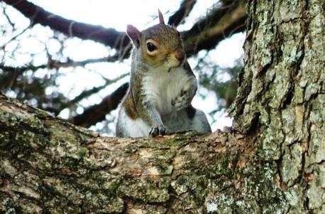 squirrel moms