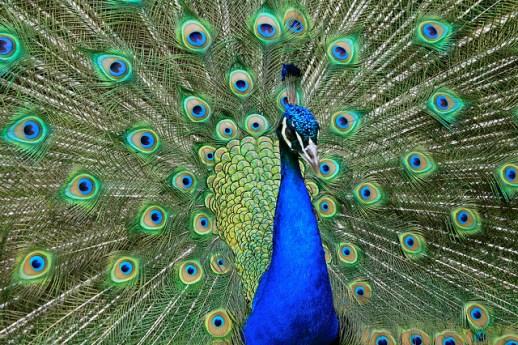 bird reproduction
