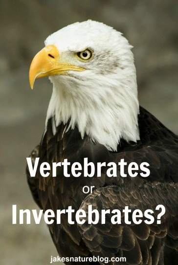 vertebrates or invertebrates