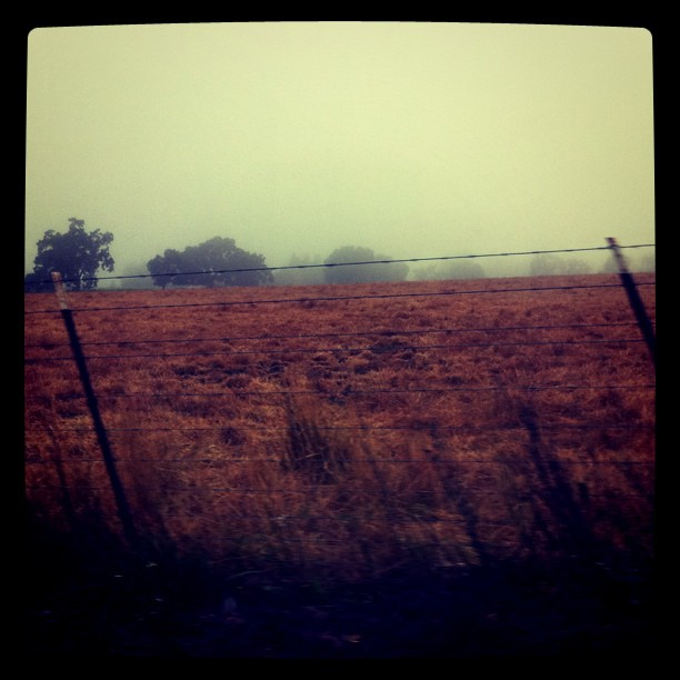 Foggy this morning...