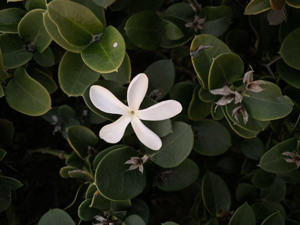 Flowers https://t.co/Ae8KudrS4o https://t.co/etJuXLVHNz