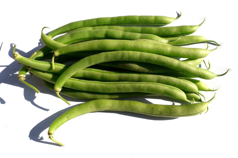 Some matured fresh French beans (Phaseolus vulgaris)