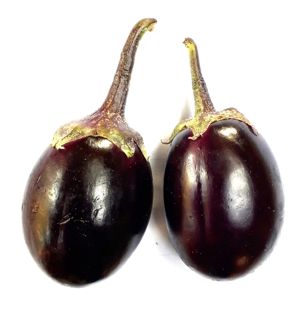 Two fresh round eggplants or brinjals (Solanum melongena)