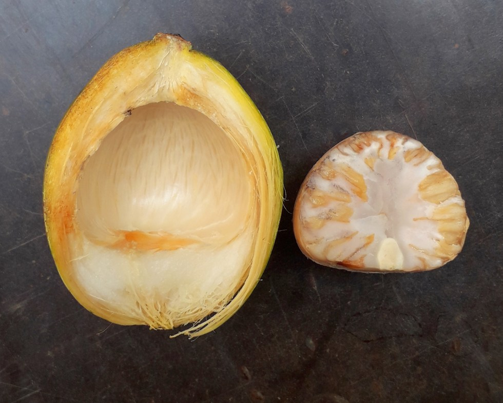 a half of a betel nut with husk