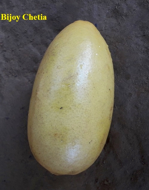 one yellow limon fruit on a gray background