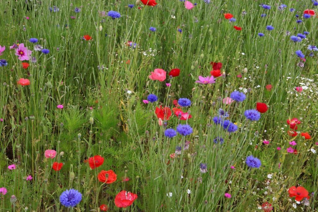 Create Your Own Enchanted Garden