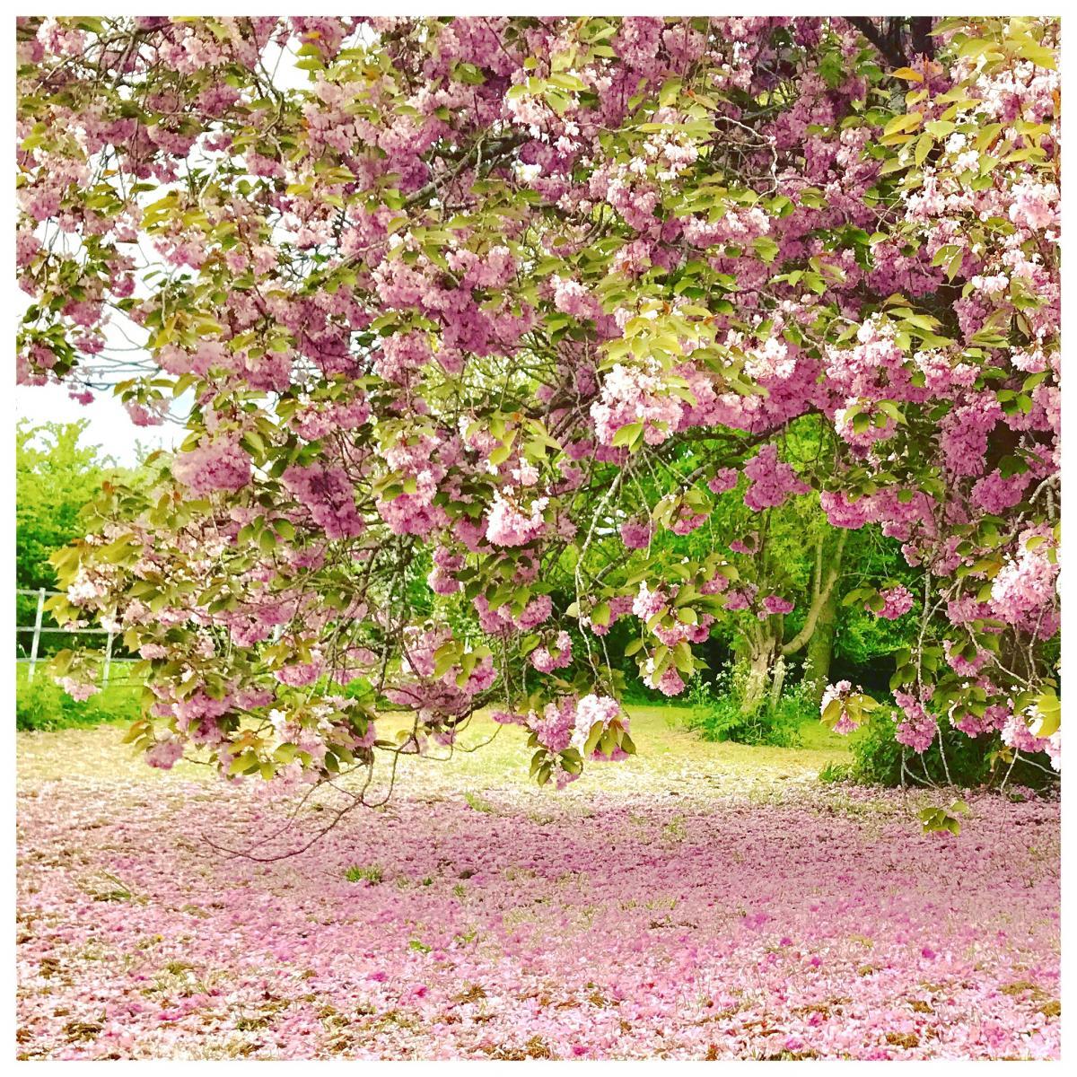 Be Like A Tree - Wednesday Wisdom 25