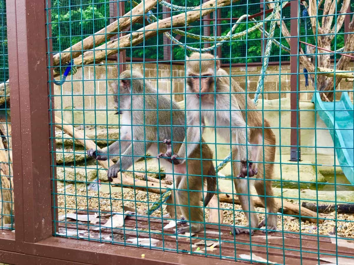 The Isle Of Wight Monkey Haven