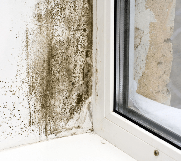 5 Reasons Your Home Might be Damp