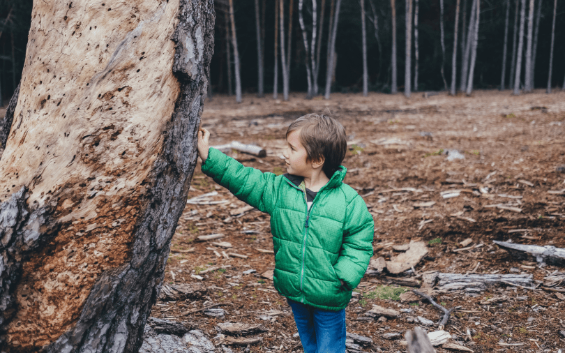 The Best Way Of Growing Trees With Children
