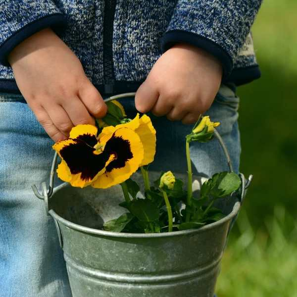 child holding bucket if pansy flowers for the article 5 Great Gardening Projects for Kids