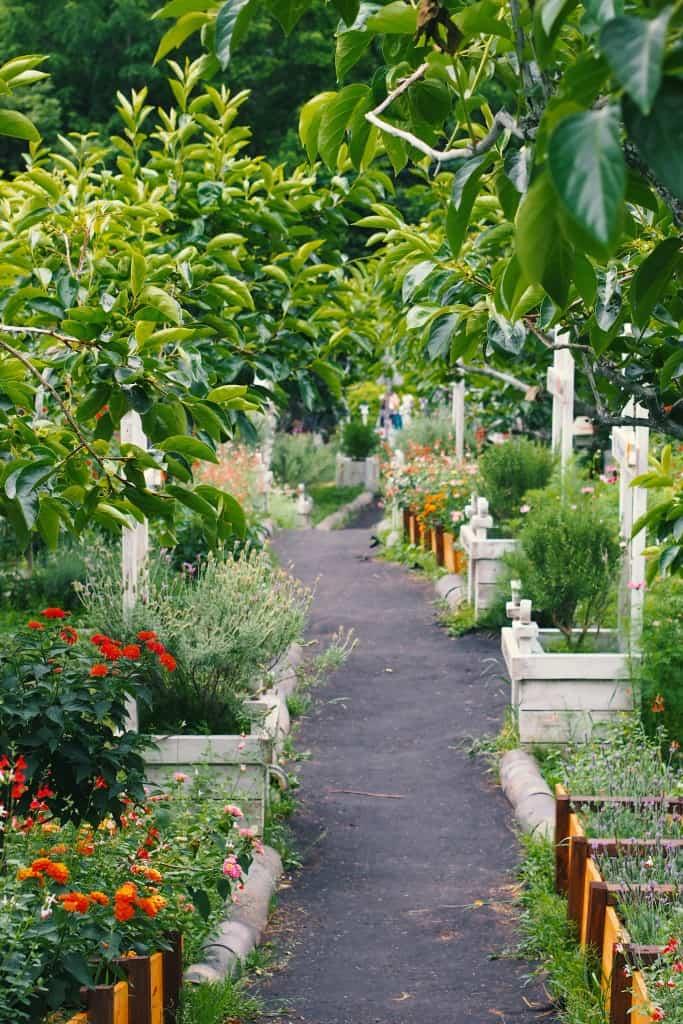 ROD allotment garden