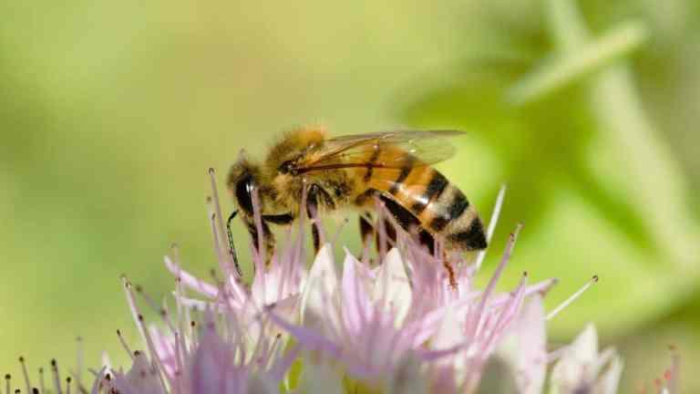 Co na ukąszenia owadów? Naturalne metody na ból i świąd