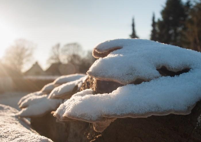 Es hat geschneit - auf Brennholz und Pilze vor der Haustür.