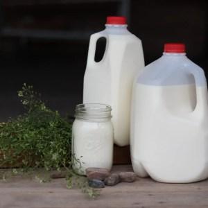 Milk, A2/A2