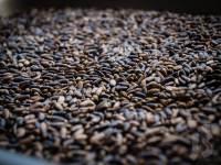Nasiona ostropestu | Kiedy zbierać zioła