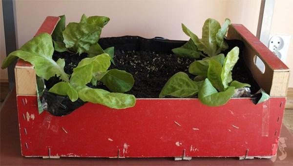 Ogród na balkonie   Skrzynka na rośliny