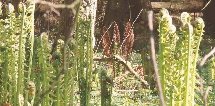 Rezerwat Kulikówka wczesną wiosną