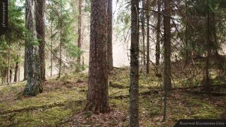Kamieniste stoki Krzemiennych Gór   Rezerwat Krzemienne Góry