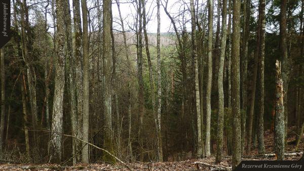 Widok ze szczytu wzniesienia | Rezerwat Krzemienne Góry