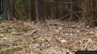 Polana z przylaszczkami   Rezerwat Krzemienne Góry